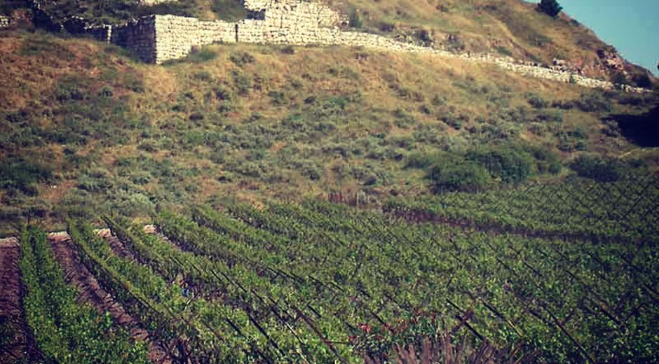 Israelsk vin
